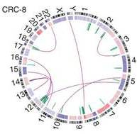 DNA structural rearrangements and copy number alterations detected in a colorectal tumors displayed as a CIRCOS plot. Source: Nature Genetics