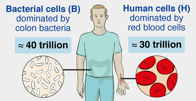 Germs, Humans, and Numbers | Weizmann USA
