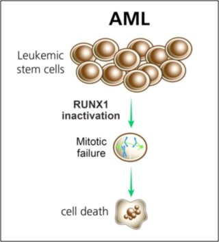 Pre-leukemic stem cells
