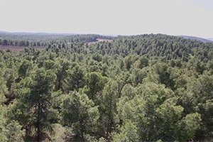 role-of-desert-forests.jpg