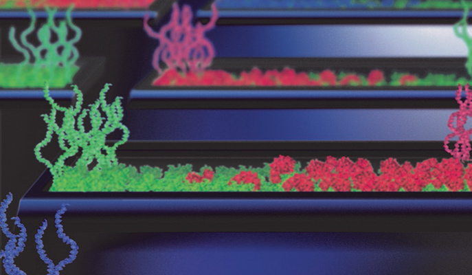 Protein Factories On A Chip